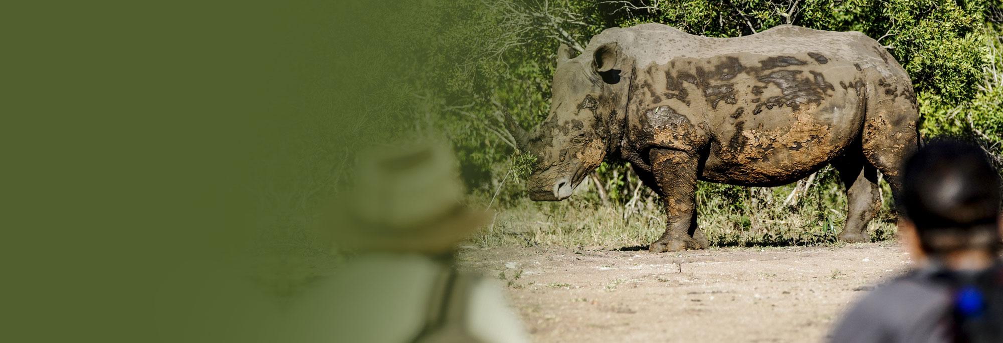 mkhaya game reserve safari in swaziland